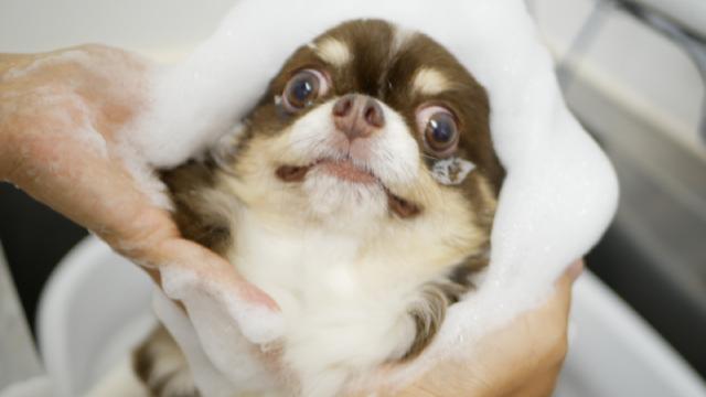 Pet Salon CROUTON